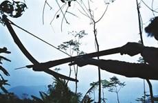 Chasse printanière, une vieille coutume villageoise des Thai