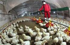 Le MADR demande la détection précoce des flambées de grippe aviaire
