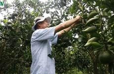 La fruiticulture a la pêche dans le delta du Mékong