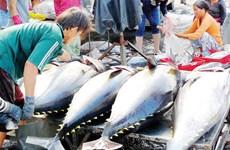 Les exportations de thon au Royaume-Uni pâtissent du Brexit