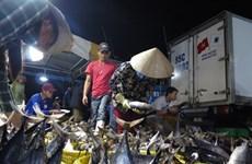 Hausse des exportations nationales de thon au Pérou