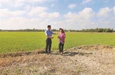 Sécheresse et salinisation ravagent le delta du Mékong