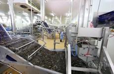 Bac Lieu: poursuite des soutiens aux entreprises de produits aquatiques