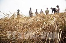 Le FVC accorde 30 M d'USD au Vietnam pour renforcer la résilience climatique