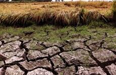 Le PNUD aide le delta du Mékong dans ses efforts de réponse à la sécheresse