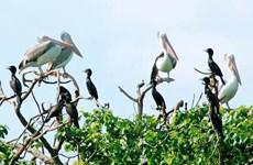 Le « jardin d'oiseaux » de Bac Lieu parmi les 10 réserves ornithologiques les plus célèbres au monde