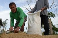 Les Philippines prévoient d'augmenter leurs achats de riz