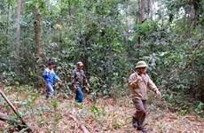 Saison sèche: Binh Phuoc renforce la protection de ses forêts