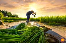 Coronavirus : l'ASEAN s'engage à garantir la sécurité alimentaire