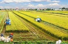 Assurer la sécurité alimentaire est une priorité vietnamienne