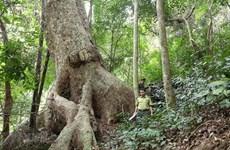 Le Vietnam compte 14,6 millions d'hectares de forêt en 2019