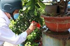 Hô Chi Minh-Ville : vigilance de mise en période de dengue