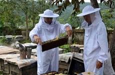 Des paysans innovants à Diên Biên