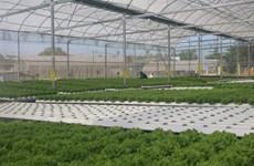 Dà Nang promeut le développement des coopératives agricoles