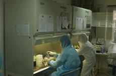 """COVID-19: le vaccin """"made in Vietnam"""" se révèle efficace sur la souris"""