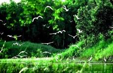 Retour à Vàm Sat à la saison de nidification