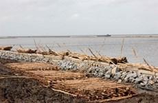 La province de Ca Mau travaille pour prévenir l'érosion et l'affaissement