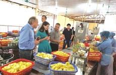 Ninh Binh dynamise son industrie agroalimentaire