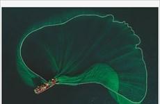 La beauté de la pêche aux anchois au Vietnam célébrée par le Daily Mail