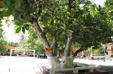 """Spratly : quatre arbres reconnus """"patrimoines nationaux"""""""