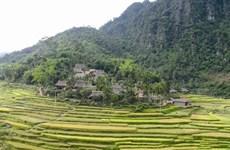 Errance dans la Réserve naturelle de Pù Luông à la saison du riz mûr