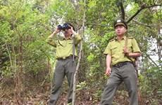 Des gardes forestiers protègent la vie sauvage à Dông Son - Ky Thuong
