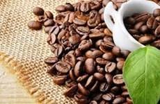 Café: plus de 1,6 milliard de dollars d'exportation au 1er semestre