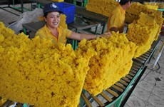 Bond des exportations nationales de caoutchouc en juin