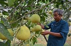 La province de Phu Tho valorise ses spécialités agricoles