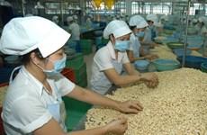 L'EVFTA promet de doper les exportations de noix de cajou
