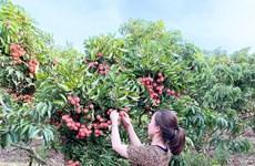 Une bonne occasion pour l'exportation de fruits au Japon
