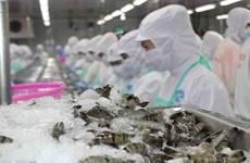 Les exportations de crevettes bondissent en sept mois