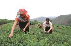 À Thanh Hoa, l'agroforesterie pour lutter contre la pauvreté