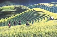 À Mu Cang Chai, l'écotourisme rime avec la préservation de l'identité culturelle