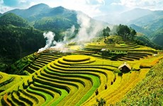 Yen Bai accueillera le festival des champs en terrasses de Mu Cang Chai