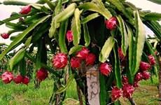 Vinh Phuc vise une agriculture moderne et durable