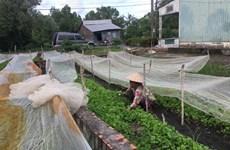 Microfinance et formation aident les Khmers à sortir de la pauvreté