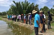 À Kiên Giang, des modèles de production alternée donnent du tonus