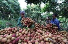 De bons signes pour les exportations de fruits et légumes