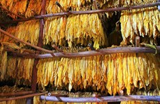 Le Vietnam publie les contingents tarifaires pour tabacs et œufs européens