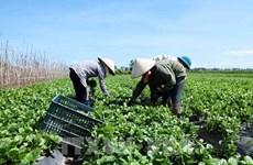 Le Vietnam et les Pays-Bas cherchent à stimuler le commerce des fruits et légumes
