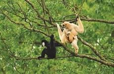 À la rescousse des animaux sauvages pris au piège