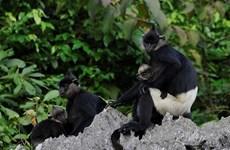 Le Vietnam rend hommage aux protecteurs de la faune