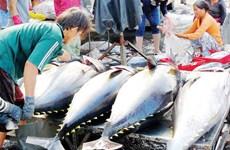 Les exportations de thon devraient augmenter fortement au cours des derniers mois de l'année