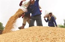 L'EVFTA dope les exportations vietnamiennes de riz