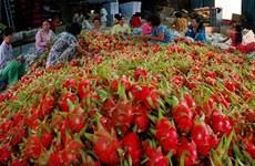 Vietnam-Chine: plus de 9,8 milliards de dollars d'import-export de produits agricoles