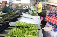 Les échanges commerciaux entre le Vietnam et le Laos retrouvent des couleurs