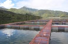 Esturgeons: le Vietnam fait partie des 10 premiers producteurs