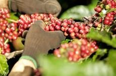Café: Plus de 2,3 milliards de dollars d'exportation en 10 mois