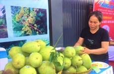 2,8 millions de dollars d'exportations vietnamiennes de mangues aux Etats-Unis